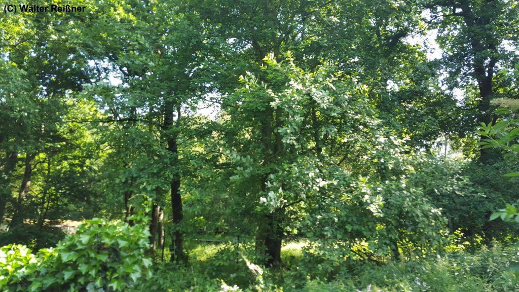 Benachbartes Waldstück