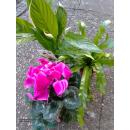 Pflanzenset Saisonpflanzen 3er Set
