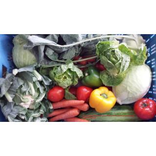 Gemüse-Box XL / 9,5 / A