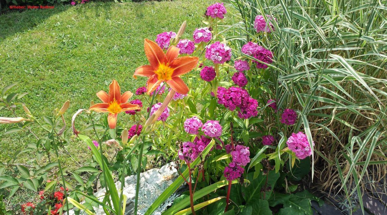 In 7 einfachen Schritten zum eigenen Gartenkonzept