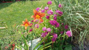 Ausschnitt eines Gartens