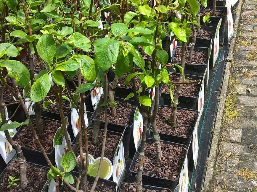 Pflanz- und Pflegeanleitung für Bäume, Sträucher, Büsche