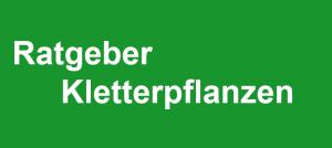 Ratgeber: Kletterpflanzen