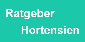 Ratgeber Hortensien Beitragsbild