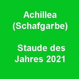 Achillea (Schafgarbe) – Staude des Jahres 2021